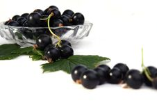 Free Currants Isolated In White Stock Photography - 2908782