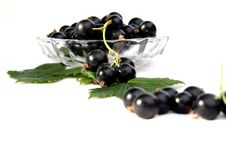 Free Currants Isolated In White Stock Images - 2908784