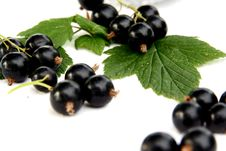 Free Currants Isolated In White Stock Photo - 2908790
