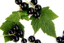 Free Currants Isolated In White Stock Photos - 2908793