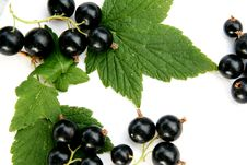 Free Currants Isolated In White Royalty Free Stock Image - 2908796
