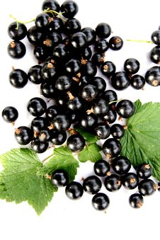 Free Currants Isolated In White Royalty Free Stock Photos - 2908808