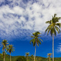 Free Coconut Tree Stock Images - 29001624