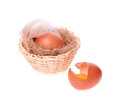 Free Egg Broken On The Background Of Nests With Egg Stock Photo - 29008470
