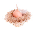 Free Yellow Of The Egg With A Feather In A Straw Hat Stock Photography - 29008792
