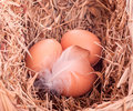 Free Three Yellow Balls With A Feather In The Nest Stock Images - 29008814