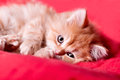 Free Red Kitten Lays On A Red Bedspread Stock Photos - 29008833