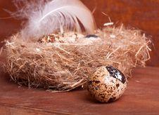 Free Quail Egg Near The Nest With Eggs Stock Photos - 29008453