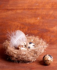 Free Quail Egg Near The Nest With Eggs Royalty Free Stock Photos - 29008468
