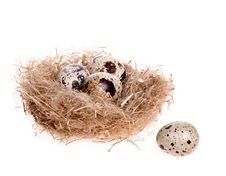 Free Quail Egg On The Background Of The Nest With Three Eggs Royalty Free Stock Images - 29008479