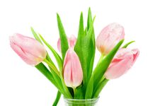Free Pink Tulips Stock Photos - 29009373