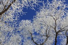 Free Frost In Winter Trees Stock Photography - 29016822
