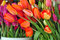 Free Flowershop Tulips Stock Images - 29017444