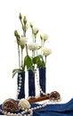 Free Eustoma Flowers With Shells Isolated Stock Photo - 29028500