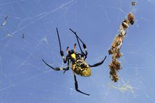Free Spider On Her Wab Royalty Free Stock Images - 29025229