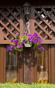 Free Petunia Flower  And Street Lantern Stock Photos - 29025803