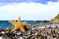 Free Starfish On The Beach Stock Photo - 29026370