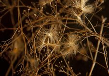 Free Natural Background. Dried Flowers. Stock Photos - 29031493