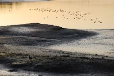 Free Wetland With Water Fowl Of Back Bay Near Newport Beach, CA Stock Image - 29040531
