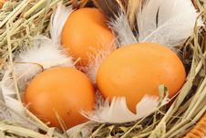 Free Eggs In Basket Stock Image - 29045701