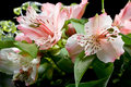 Free Bouquet Of Pink Lilies On A Black Background Royalty Free Stock Photos - 29051388