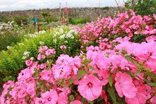 Free Beautiful Pink Garden Flowers Royalty Free Stock Image - 29051546