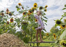 Small Qirl And Sunflowers Royalty Free Stock Photo