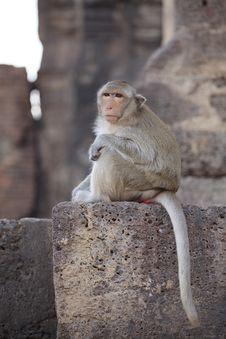 Free Monkey Stock Photo - 29058110