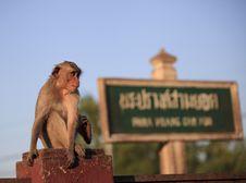 Free Monkey Royalty Free Stock Photos - 29058968