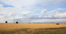 Free Field Of Ripe Wheat. Royalty Free Stock Images - 29059189