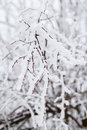 Free Winter Snow Branches Stock Image - 29061511