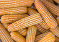Free Yellow Dried Corn Royalty Free Stock Photography - 29067707