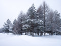 Free Winter Trees Royalty Free Stock Photography - 29068377