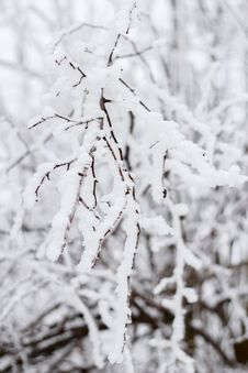 Winter Snow Branches Stock Image
