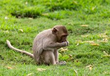 The Monkey Baby Stock Photography