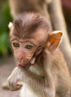 The Monkey Baby Stock Photos