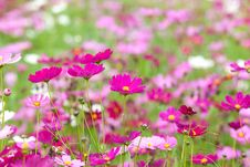 Free Beautiful Flowers In The Meadow Stock Photos - 29069773