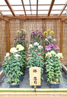 Free Flower Garden At Nijo Castle Stock Images - 29080204