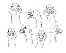 Cute Goose With Different Facial Expressions Stock Photos