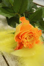 Free Yellow Rose And Feathers Royalty Free Stock Photo - 29094635