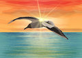 Free Seagull Flying Over The Sea In Front Of The Sun Royalty Free Stock Images - 29095489