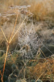 Free Spiders Web. Royalty Free Stock Images - 29092869