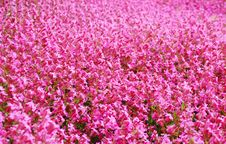 Free Pink Flowers Royalty Free Stock Image - 29096046
