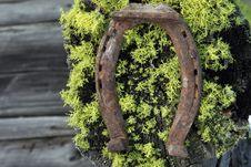 Rusty Horseshoe With Old Moss Background