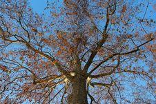 Free Aim The Sky To Hit The Tree Top Stock Photos - 29098453