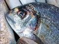 Free Blue Fish Stock Image - 2917801