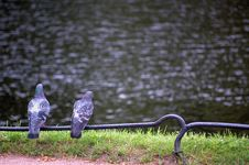 Free Birds Near The Lake Royalty Free Stock Photos - 2911968