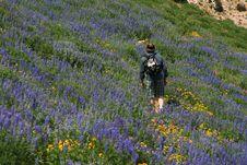 Free Wildflower Hiker Stock Photos - 2913763
