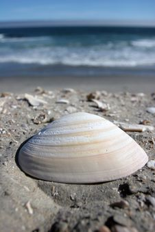 Free Seashell Royalty Free Stock Photography - 2914967