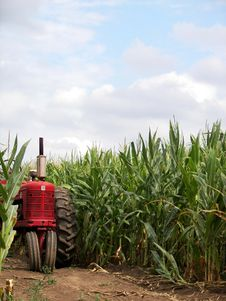 Free Red Tractor In Corn Field Royalty Free Stock Image - 2915206